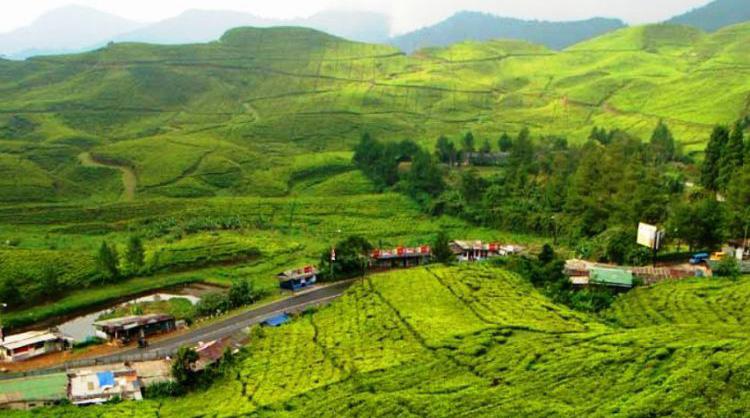 Puncak Bogor - Jawa Barat