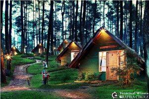 camping-grafika-cikole